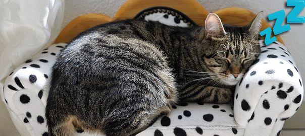Gato en un sofá a medida